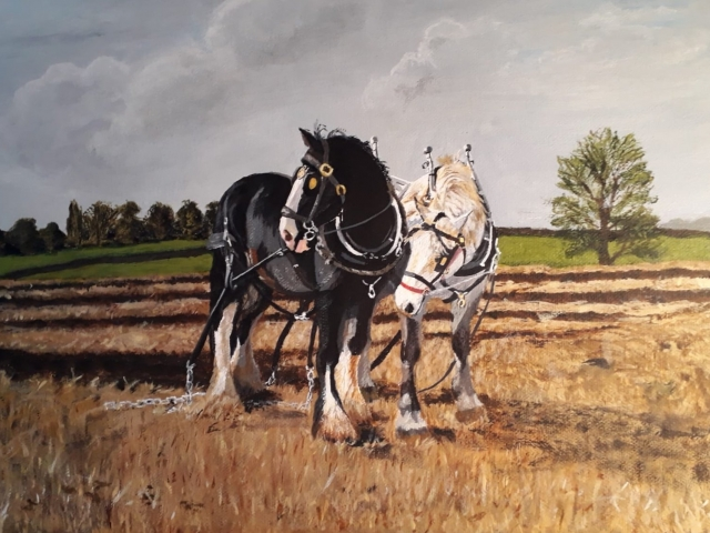 Two shire horses painting