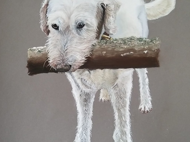 White dog holding a branch