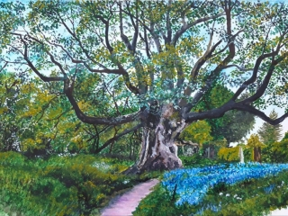 Painting of Sycamore Tree