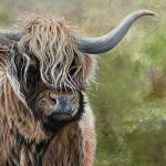 Highland cattle, acrylics on the box canvas